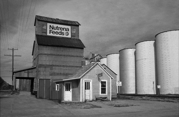 8' x 20' logo signage at the top. One of 20 grain elevators in Kansas and Nebraska painted for Nutrena Feeds and Purina Feeds.